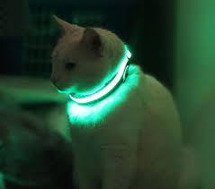 PIC cat wearing future collar